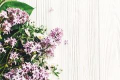 你好春天图象 与gree的美丽的雏菊和丁香花 免版税库存图片