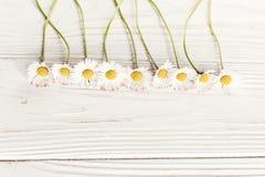 你好春天舱内甲板位置 在土气白色w的美丽的雏菊花 免版税库存照片