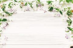你好春天舱内甲板位置 新鲜的雏菊淡紫色花和绿色草本 免版税库存图片