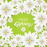 你好春天 与白花框架的手字法 在绿色背景的纸春黄菊 也corel凹道例证向量 免版税库存照片