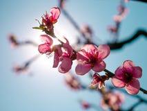 你好春天-花在阳光下 库存图片