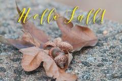 你好秋天!橡木离开与橡子在水泥背景 免版税库存图片