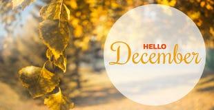 你好12月秋天构成 在天空背景的黄色和橙色叶子 免版税库存图片