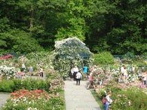 佩吉洛克菲勒玫瑰园10 免版税库存图片