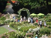 佩吉洛克菲勒玫瑰园19 免版税库存图片