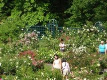 佩吉洛克菲勒玫瑰园52 库存照片