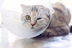 佩带一个防护钉头切断机衣领的猫 库存图片