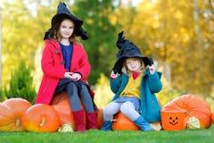 佩带万圣夜的可爱的小女孩打扮获得在南瓜补丁的乐趣 免版税库存图片