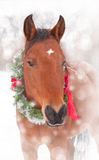 佩带圣诞节花圈的红色海湾马 库存图片
