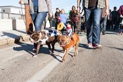 佩带在折衷亚特兰大游行的狗服装步行 库存图片