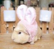 佩带复活节的一只逗人喜爱的仓鼠老鼠一个桃红色兔宝宝头饰带 图库摄影