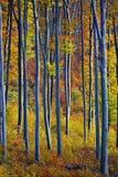佩带秋天颜色的结构树 图库摄影