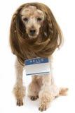 佩带空白的名牌的深色的长卷毛狗 免版税库存图片
