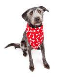 佩带红色骨头印刷品班丹纳花绸的狗 免版税图库摄影