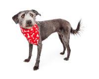 佩带红色骨头班丹纳花绸的逗人喜爱的狗狗 免版税库存图片
