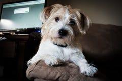 佩带衣领的狗 免版税库存照片