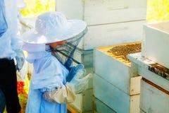 佩带防护成套装备观看的蜂的Yung蜂农在蜂箱 库存照片