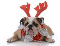 佩带鲁道夫鹿角的狗 免版税库存图片