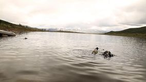 佩戴水肺的潜水在山湖,紧急救助者的实践的技术 浸没在凉水中 股票视频