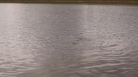 佩戴水肺的潜水在山湖,紧急救助者的实践的技术 浸没在凉水中 影视素材