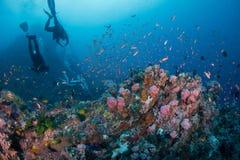 佩戴水肺的潜水 库存图片