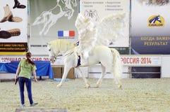 佩格瑟斯莫斯科国际马陈列 库存图片