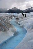 佩里托美利奴绵羊的冰川的远足者在巴塔哥尼亚 免版税库存照片