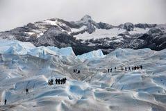 佩里托美利奴绵羊的冰川的远足者在巴塔哥尼亚 库存照片