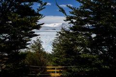 佩里托莫雷诺冰川,埃尔卡拉法特,阿根廷 库存图片