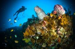 佩戴水肺的潜水巨型海绵bunaken苏拉威西岛水下的印度尼西亚 库存图片
