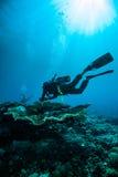佩戴水肺的潜水潜水者kapoposang苏拉威西岛水下的印度尼西亚 免版税库存图片