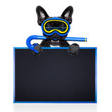 佩戴水肺的潜水狗 免版税库存图片