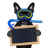 佩戴水肺的潜水狗 免版税图库摄影