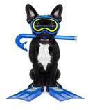 佩戴水肺的潜水狗 免版税库存照片