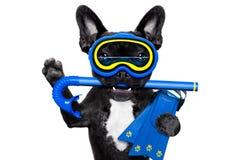 佩戴水肺的潜水狗 库存图片