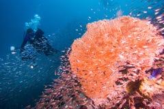 佩戴水肺的潜水 免版税库存照片