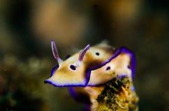 佩戴水肺的潜水lembeh印度尼西亚nudibranch潜水者 免版税库存照片