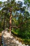 使一棵树,路环境美化,在木头 库存图片