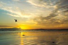 使与海鸥剪影,西开普省,南非的日落靠岸 免版税图库摄影