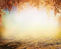 使与草坪的被弄脏的自然背景和五颜六色的叶子惊奇的秋天在公园 库存图片