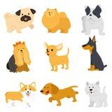 使传染媒介狗惊奇的逗人喜爱的色的狗品种 导航滑稽的在时髦平的样式的动画片不同的品种狗的例证 库存照片