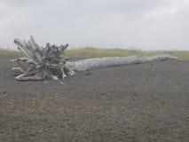 使偏差木头靠岸 库存照片