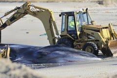 使停止的鲸鱼的埋葬靠岸在微风点 免版税库存图片