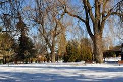 使公园冬天环境美化 图库摄影
