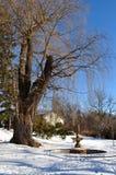 使公园冬天环境美化 免版税库存照片