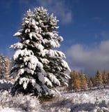 使冬天环境美化 免版税库存图片