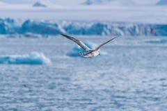使卑尔根群岛朗伊尔城斯瓦尔巴特群岛北冰洋冬天极性天日落天空冰川山环境美化的冰本质  库存图片