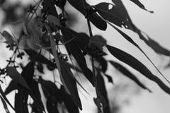 使变冷的叶子 免版税库存图片