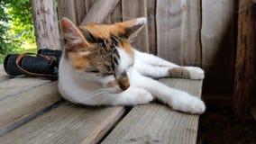 使变冷的猫 免版税库存照片