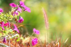 使命草和紫色花 库存图片